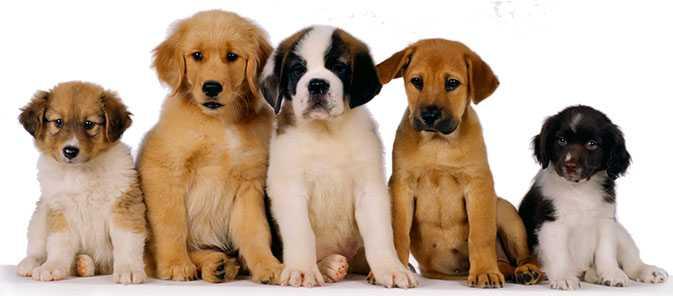 İstanbul evde Köpek Eğitimi
