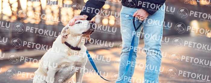 Evde Pozitif Köpek Eğitimi