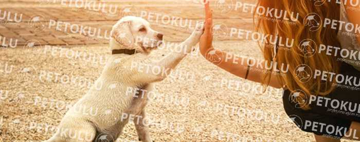 Pozitif Köpek Eğitimi Nedir Ne Değildir ?