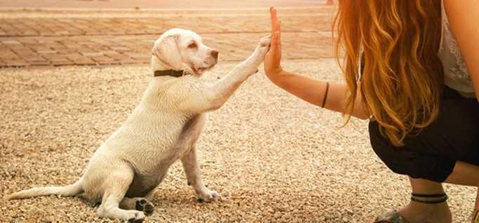 Köpek Eğitimi Hizmetleri