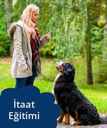 köpek itaat eğitimi