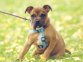 Köpeklerde Eğitim Ne Zaman Başlamalıdır ?