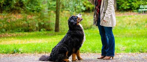 Köpeklerde Ne Zaman Başlamalıdır ? | Köpek eğitimi istanbul