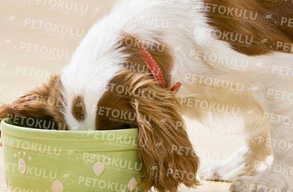 En İyi Köpek Maması Markaları