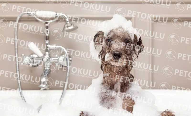 köpekler nasıl yıkanır