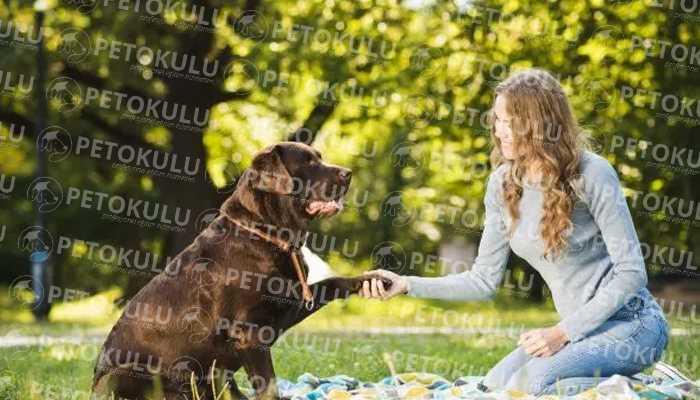 Köpek Sahibi Olmanın Sorumlulukları