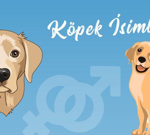 Köpeğiniz İçin Farklı İsim Önerileri