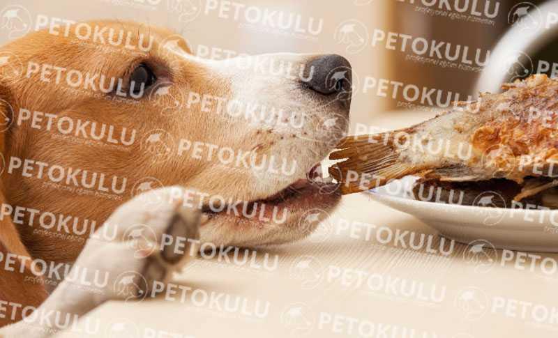 Köpeklerde Yemek Disiplini ve Beslenme