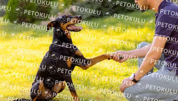 Köpek Eğitimi Kartal
