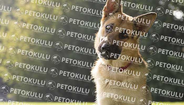 Arnavutköy Köpek Eğitimi