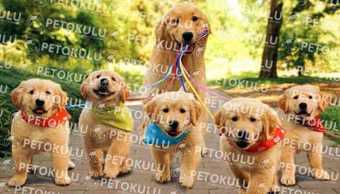 Köpek Eğitimi İçin 3 Önemli Öneri