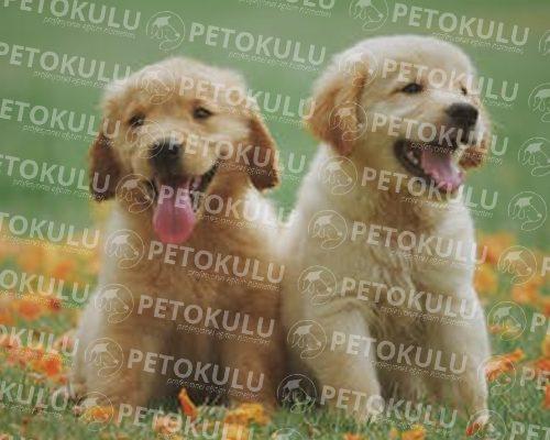 Köpek Eğitimi Ataşehir