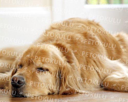 Köpek Eğitimi Başakşehir