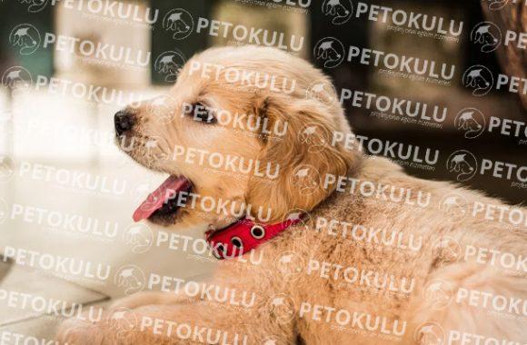 Köpek Eğitimi Bakırköy