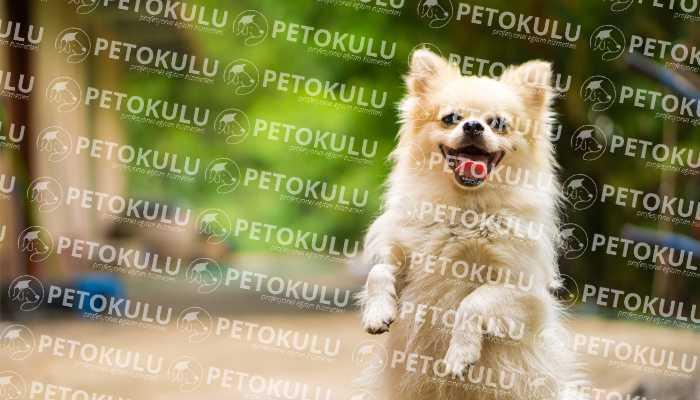 Köpek Eğitimi Bayrampaşa