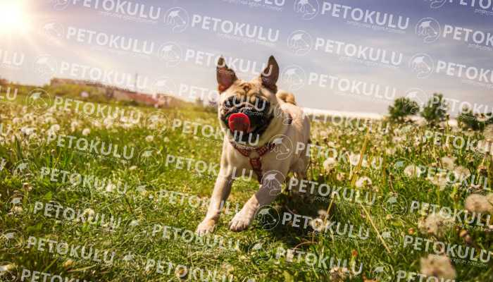 KöpekEğitimi Beyoğlu