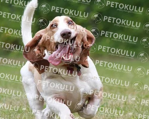 Köpek Eğitimi Beyoğlu
