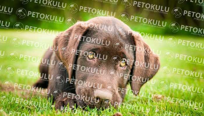 Köpek Eğitimi Maltepe