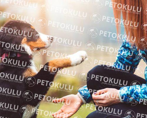 Köpeklerde İnsan Üzerine Atlama Davranışı