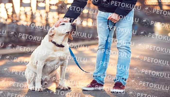 Köpeğe Nasıl Komut Eğitimi Verilir?
