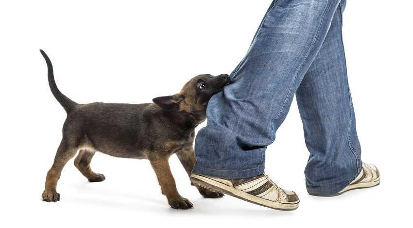 Köpeğimin Saldırganlığını Nasıl Engellerim