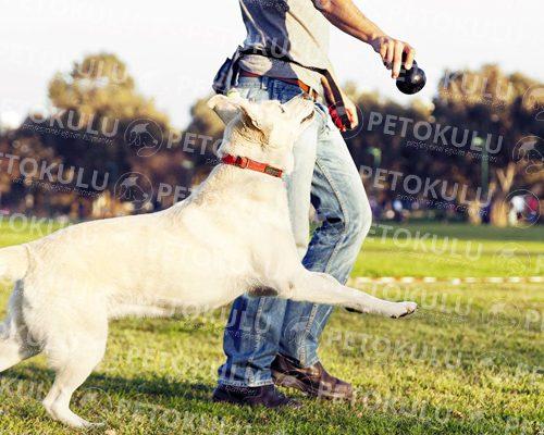 Pendik Köpek Eğitimi