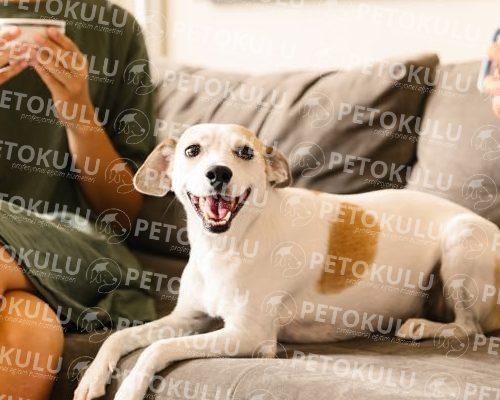Hafta İçi Köpek Eğitimcisi