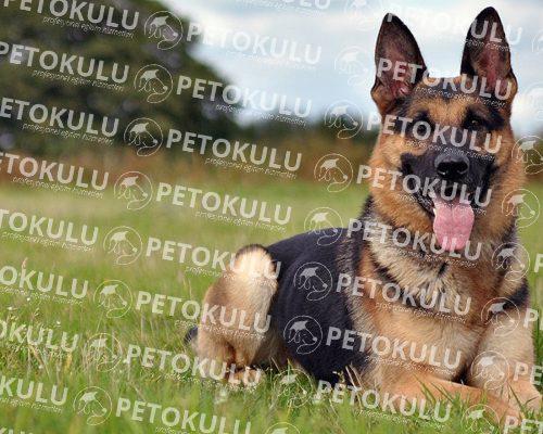 İstanbul Köpek Eğitim Tesisi