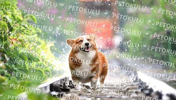 Kadıköy Köpek Eğitimi