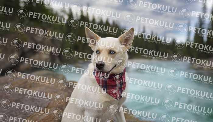 Avcılar Köpek Eğitimi ve Oteli