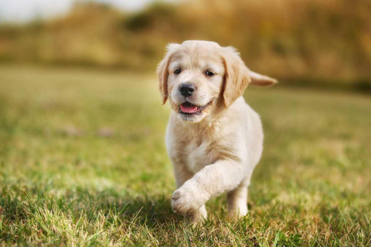 Ümraniye Köpek Eğitimi