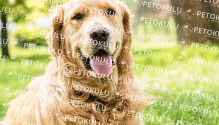 Köpek Eğitimi Üsküdar