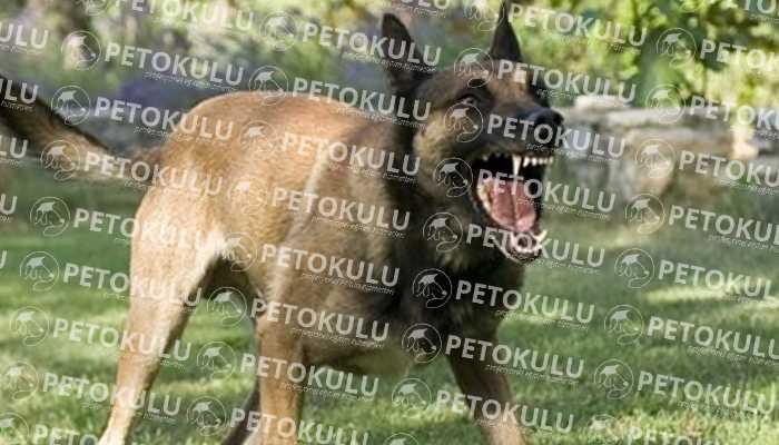 Köpeklerde Davranış Bozuklukları Sorunları