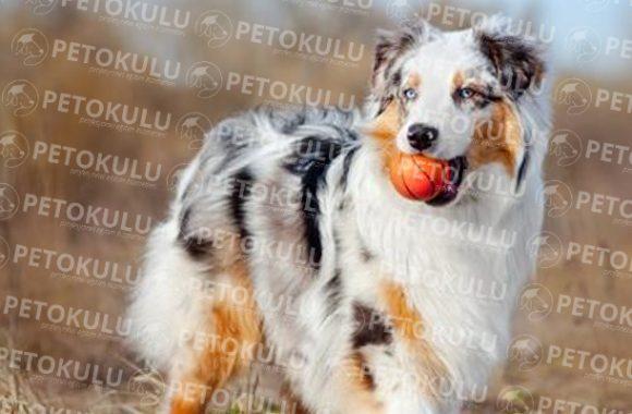 Köpek Eğitimi Aksaray