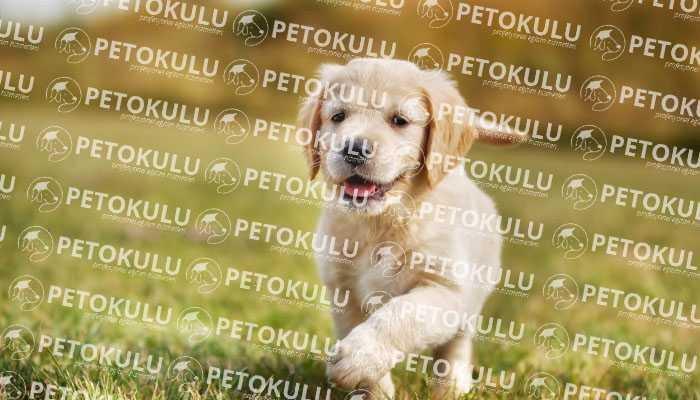 Beykoz Köpek Eğitimi Firması