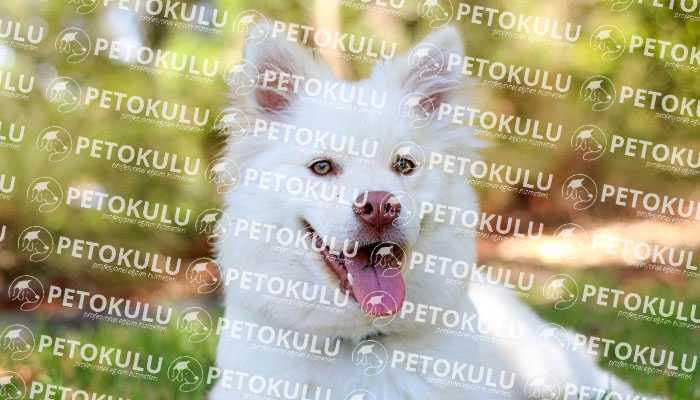 Evden Ayrılma İpuçlarına Köpeğinizi Alıştırma