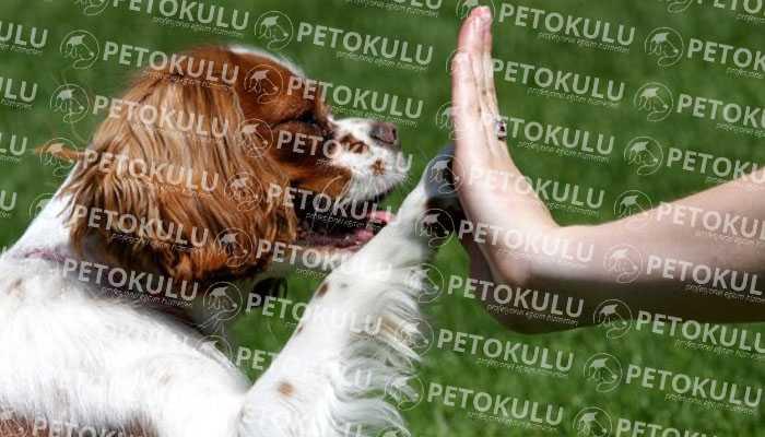 Köpeğinizin Yaşam Alanında Özel Köpek Eğitimi