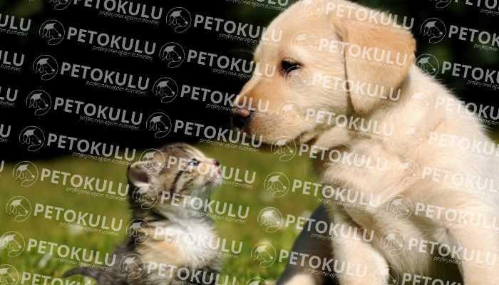 Köpeklerde Sosyalleştirme Eğitimi (Sosyalizasyon)