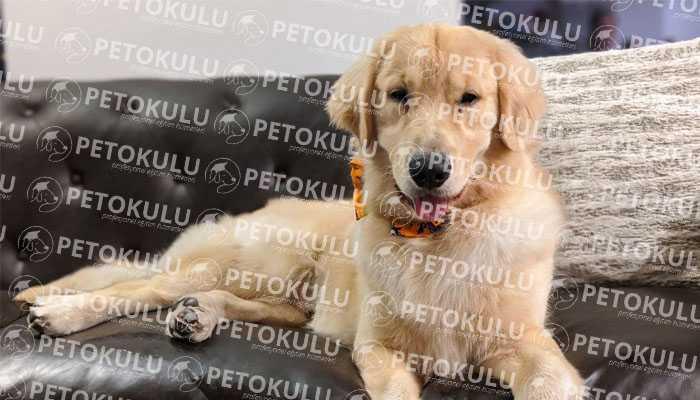 Köpeklerde Temel İtaat Eğitimi
