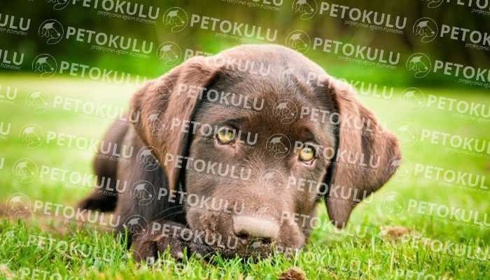 Yerinde Köpek Eğitimi Hizmetlerimiz