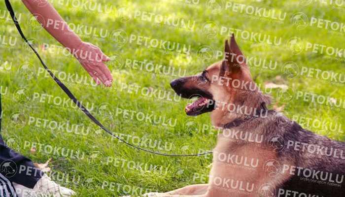 Yerinde Köpek Eğitimi Nasıl Uygulanır