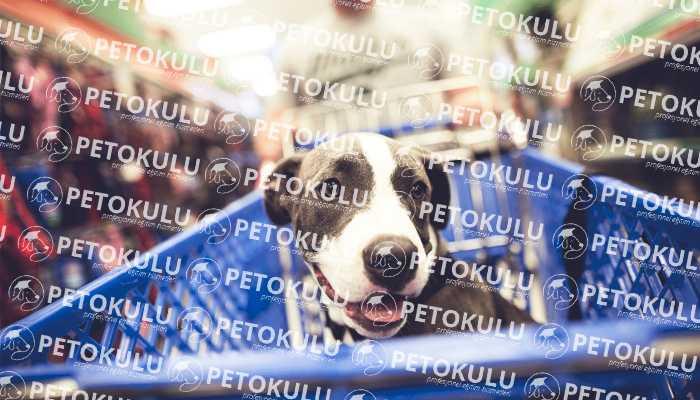 İlk Kez Köpeği Olacaklar İçin Alışveriş Rehberi