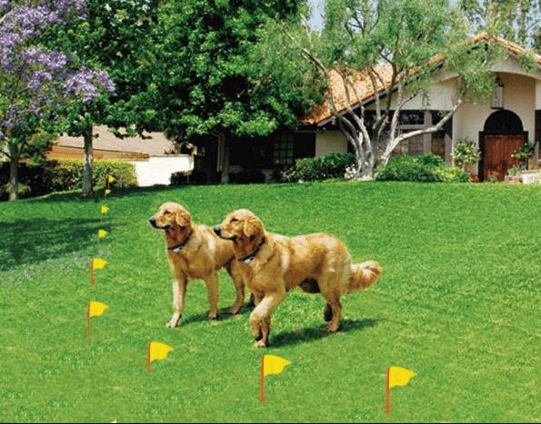 Kablolu Elektrikli Köpek Eğitim Çiti