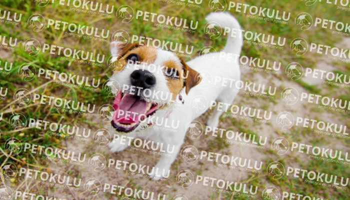 çok havlayan köpek