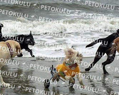 Engelli köpek eğitimi