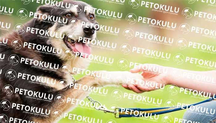Köpeğe Pati Ver Komutu Öğretmek