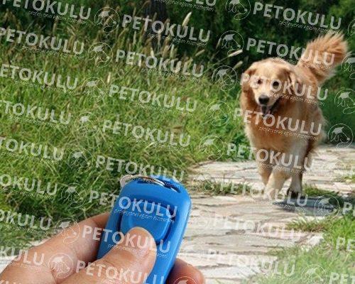 Köpek Clicker Eğitimi Nedir?