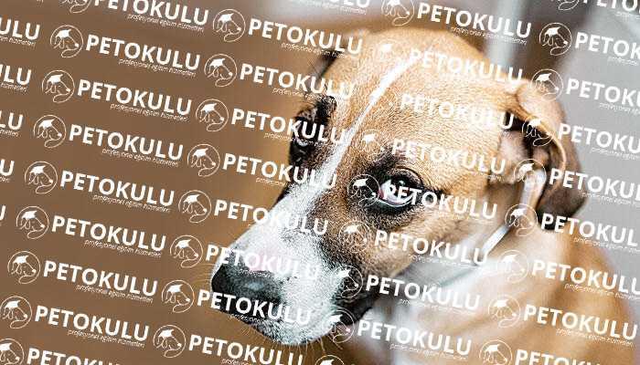 Köpek Davranış Analizi; Köpek davranışları neden ortaya çıkar