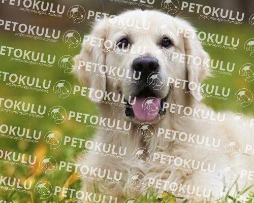 Köpek Eğitim Çiti Nedir, Nasıl Kullanılır?