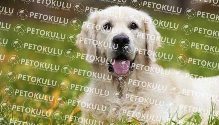 Köpek Eğitim Çiti | Hayatınızı Kolaylaştıracak Avantajları